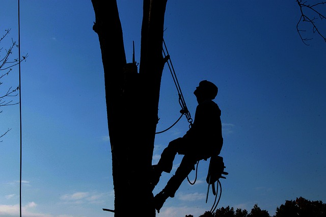 Tree surgeon ringwood