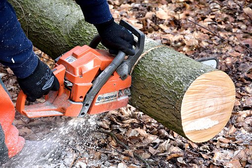 branch pruning melbourne eastern suburbs