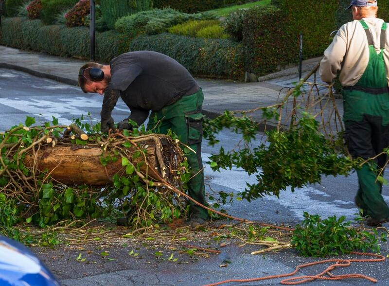 cheap tree removal melbourne