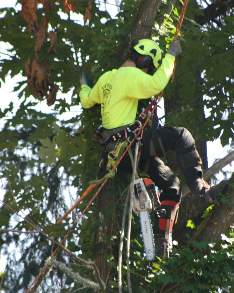 melbourne Tree lopping