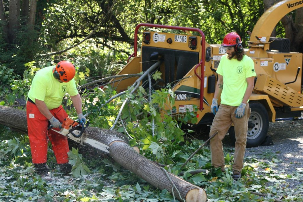tree service eastern suburbs