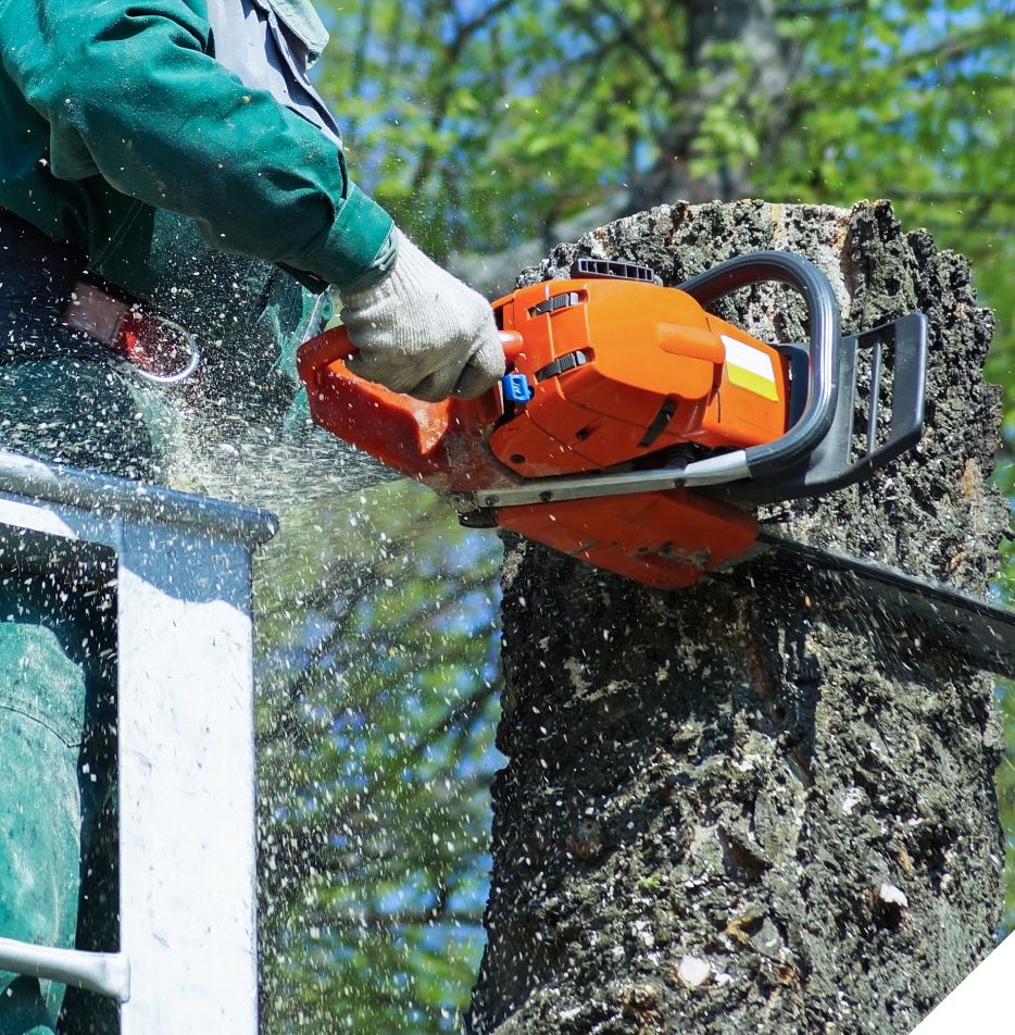 tree services melbourne